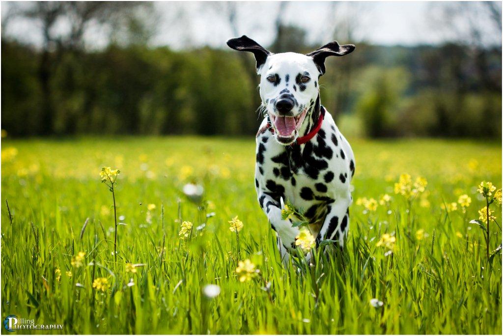 Pilling Dog Walking Field