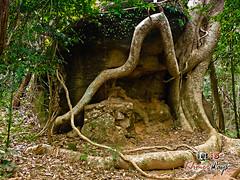 Nature Calls- Koh Ker.jpg