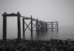 STICKS AND STONES (birds) (kenny barker) Tags: sea mist seascape monochrome landscape lumix scotland fife panasonicg1 welcomeuk hawkscraigjettyaberdour kennybarker