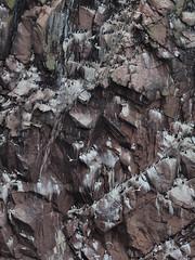 Metropolis (1M055777 E-M1 210mm iso200 f4 1_500s) (Mel Stephens) Tags: uk birds animals visions coast scotland aberdeenshire wildlife olympus coastal pro gps buchan omd em1 2016 m43 q2 40150mm bullers mirrorless microfourthirds mc14 mzuiko 201605 20160505