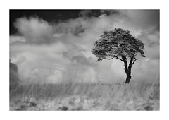 The Tree (MattWalkleyPhotography) Tags: longexposure sky blackandwhite tree nature grass clouds landscape somerset mendipspriddy