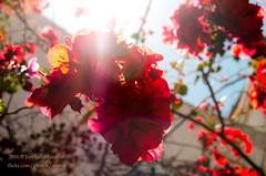 Flores rojas (mabej2014) Tags: flowers blue red portrait sky sun white black flores blanco sol azul glasses rojo retrato negro flor cielo gafas barba courtyards patios
