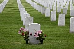 Memorial (Read2me) Tags: pree she cye cemetery graves stone rows many arlingtonnationalcemetery thechallengefactory gamesweepwinner perpetualchallengewinner ruby5