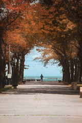 Fall In Chicago (mckenziemedia) Tags: chicago illinois walk path sidewalk man pedestrian lake michigan scenic landscape