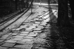 Steps in the Park (tomimrei) Tags: street blackandwhite sofia bulgaria