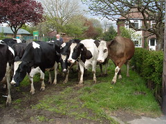 Farmwork down Stapleford Road Trowell : S1053387 (Lenton Sands) Tags: