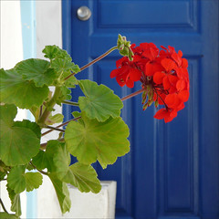 greek contrasts (duqueros) Tags: door blue red flower detail contrast square island insel greece blume griechenland mykonos tre duqueiros