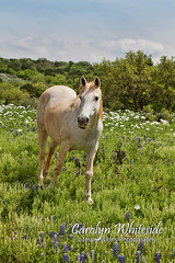 White Horse in Flowers
