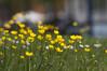 _DSC0771 (N.Sample) Tags: flowers bad blumen wildungen brunnenallee