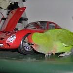 This is my Ferrari! I am a good mechanic, much better than those of Formula 1! :) thumbnail