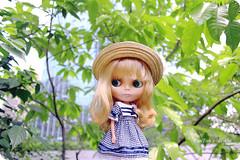 在树上唱歌 Singing in the tree