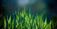 In the grass (Cyrielle Beaubois) Tags: blue green grass canon eos bokeh mark sigma ii 5d 2012 55200mm canoneos5dmarkii cyriellebeaubois