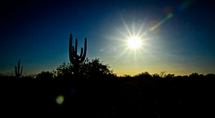 Desert flare (Eliza Belle Photography) Tags: arizona cactus color contrast cacti landscape grit desert vibrant gritty sunflare