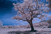 Memories of my childhood (Shutter wide shut) Tags: tree ir antique philippines canoneos20d infrared canonef1740mmf4lusm tibiao