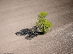 Lone tree in a newly seeded corn field. Richmond, Ontario dairy farm - Kite Aerial Photography (KAP) (Rob Huntley - Kite Aerial Photography) Tags: brown kite ontario field corn cornfield farm ottawa farming aerialview aerialviews aerial farmland richmond land richmondroad kap agriculture dairy aerialphotography kiteaerialphotography stubble fallowfield easternontario dairyfarm aerialphotograph kitephotography oldrichmondroad