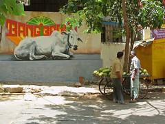 DSCI0223 (Mr Thinktank) Tags: india bangalore indien inde bengaluru