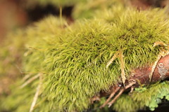 Moss / () (TANAKA Juuyoh ()) Tags: green moss high hires resolution 5d hi res  tone gunma markii       katashina
