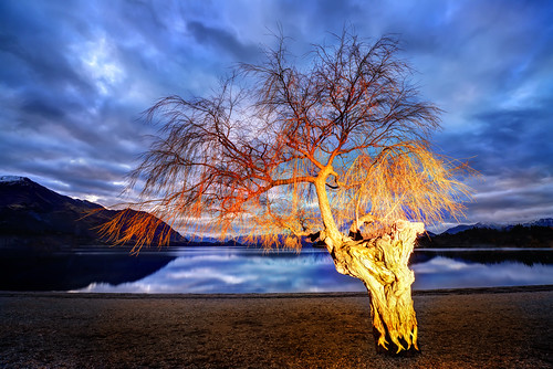 Lonely Tree Aflame