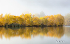 _DNZ0775-Foggy-reflection-near-Twizel-lighter (Carol Cohn) Tags: autumn newzealand mist fall yellow fog reflections solitude serenity leafcolor