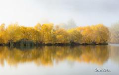 _DNZ0775-Foggy-reflection-near-Twizel-lighter (Carol Cohn) Tags: autumn newzealand mist fall yellow fog reflections solitude serenity leafcolor