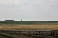 One Lone Tree (susan_copley) Tags: tree prairie fenceline