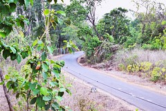 Road between the trees (Patiljayendra) Tags: tree nature environment road route konkan green way ecofriendly beautiful