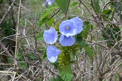 001-009 flores silvestres (agnaldo.severo) Tags: flores verde folhas galhos lilas
