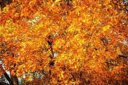 Mt Macedon Autumn Colours-1