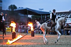 Pintos_Equitana_2016-1045 (tokerpress) Tags: messe pferde shou pintos tokerpress alexandertoker equitanaopenair ctokerpress2016 gestütgoldenepintos