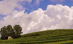 Vineyards, Clouds and Sky (Che Camera) Tags: nature de landscape deutschland vineyard wine outdoor natur landschaft kaiserstuhl weinberg bischoffingen badenwrttemberg vogtsburg sonyalpha7 vogtsburgimkaiserstuhl teamsony ef100lf28isusm ilce7