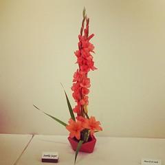Gladiolus, lily