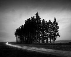 Standing Firewood (davidandsus) Tags: road blackandwhite tree rain mono nz otago wanaka littlestories picswithsoul