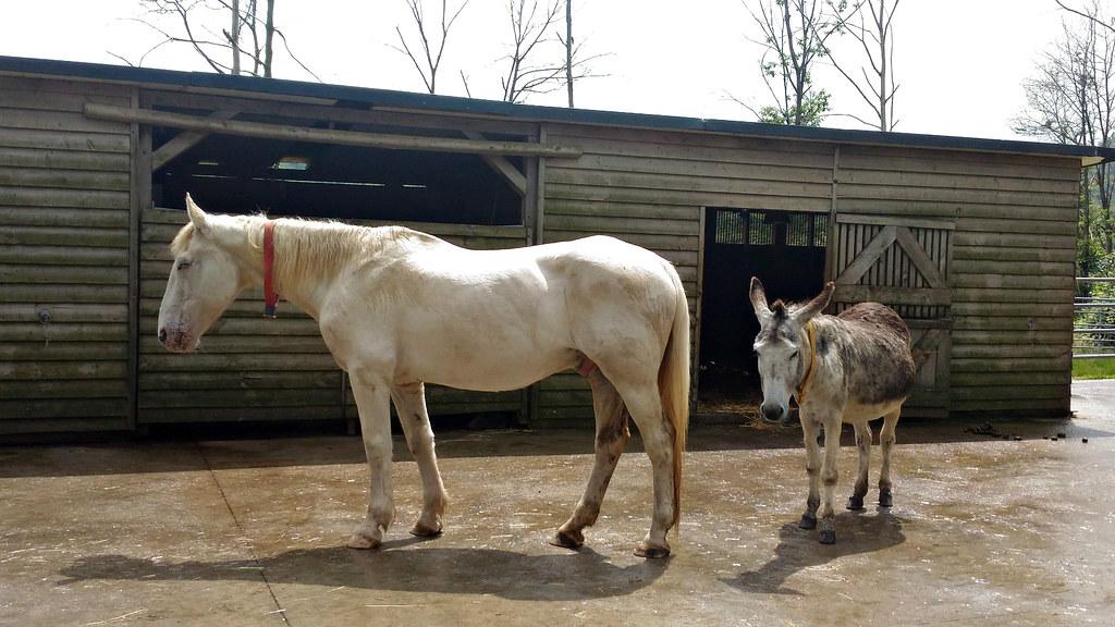 Friends (Marty_0722) Tags: Friends Italy Horse Nature Animals Friend Italia  Donkey Natura Sala