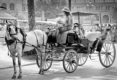 Horse and Carriage (James- Burke) Tags: street horses blackandwhite spain candid transport seville blackdiamond horsecarraige