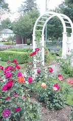 11825849_10153096005507076_4765972341438071081_n (jmac33208) Tags: park new york roses rose garden central schenectady