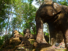 Elephant - Kulen Mountain.jpg