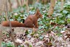 Un écureuil  sur un tronc, Red Squirrel (Zed The Dragon) Tags: wild animal french geotagged effects photography soleil photo squirrel squirrels flickr minolta photos sony images apo full f45 frame getty fullframe alpha antony animaux foret parc postproduction spec français sal zed gettyimages 2012 francais sceaux lightroom écureuil sauvage effets 200mm ecureuil parcdesceaux iso500 24x36 a850 0004sec sonyalpha hpexif parcsceaux dslra850 alpha850 zedthedragon mosaique2012a