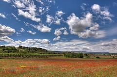 Poppies view BFG (decar66) Tags: flowers red primavera clouds spring mediterranean poppies poppyfields ontinyent amapolas amapola adormidera onteniente lavalldalbaida campodeamapolas salvabarbera