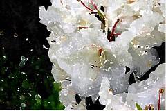 Sieh, mein Herz, wie Gottes Lamm (amras_de) Tags: flower fleur drawing flor dessin blomma blume fiore dibujo blüte blomst tegning desenho disegno dibuix virág lore teikning crtež bloem zeichnung tekening blóm çiçek floro kwiat flos ciuri çizim kvet teckning kukka rysunek cvijet flouer bláth cvet rajz zieds piirustus õis floare desen blome žiedas kresba risba zimejums tegnekunst adumbratio desegnajo