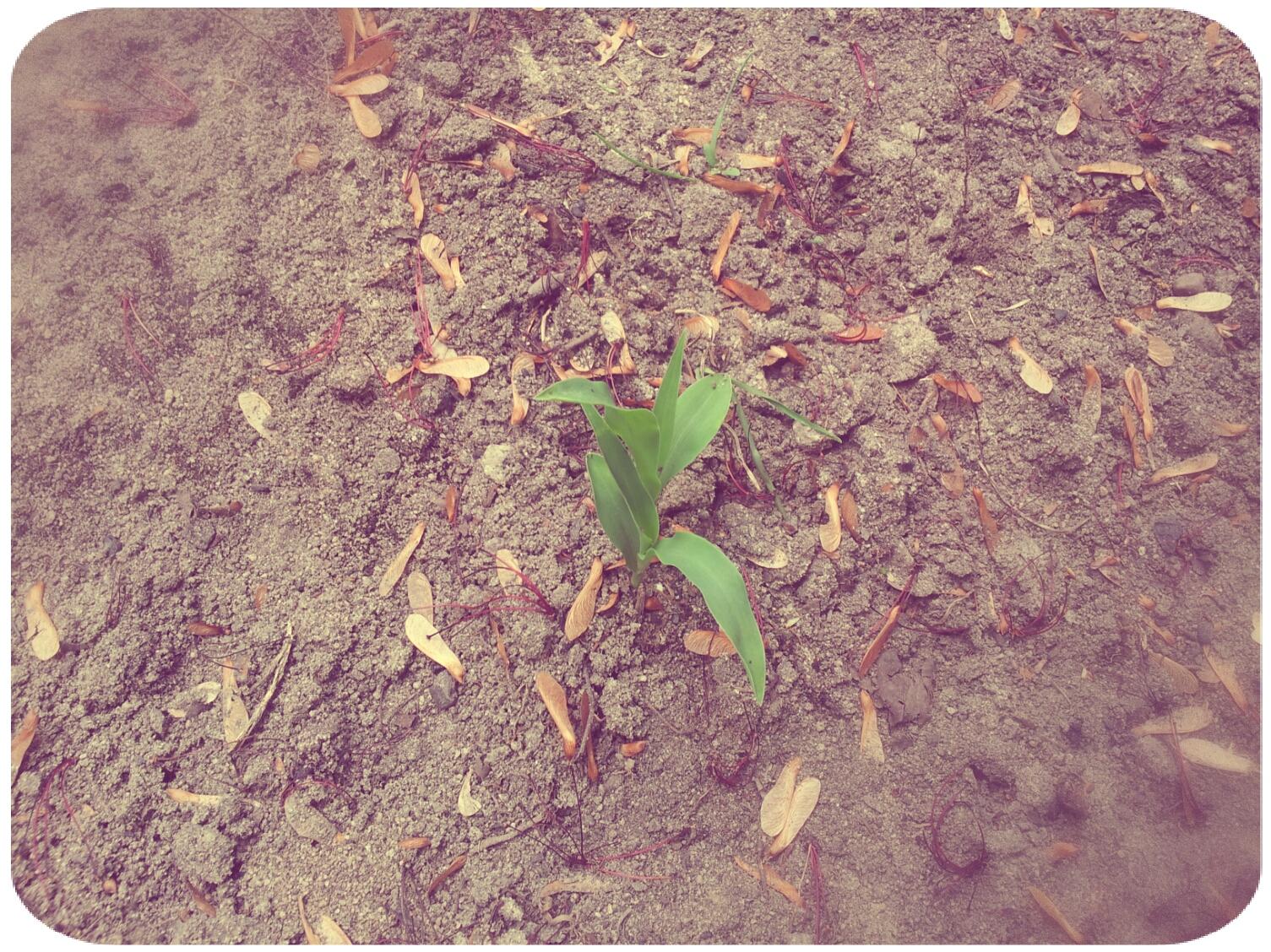 2012-03-30 13.57.13_Melissa_Round.jpg