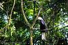 Palawan Talking Mynah at Palawan Wildlife Rescue and Conservation Center (PinoyTravelFreak) Tags: palawan puertoprincesacity crocodilefarmandnaturepark palawanwildliferescueandconservationcenter