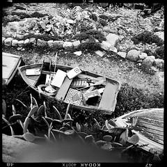 (manni39) Tags: sardegna 120 6x6 film vintage mediumformat square boot boat iso400 bateaux vintagecamera kodaktrix folder sardinien franka alghero rollfilm schneiderkreuznach frankasolida mittelformat moyenformat balgenkamera solida radionar frankasolidaiii schneiderkreuznachradionar radionar75mm29