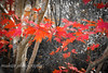 Autumn Leaves (mukunkanap) Tags: road street blue autumn panorama house mountain holiday toronto ontario canada mountains color colour tree fall wet rain fog corner canon fence garden season gate track mt bright fallcolors pano cottage autumncolors mount trail hedge wilson aussie canopy soe colorsoffall 500d colorsofautumn supershot mywinners abigfave fallintoronto anawesomeshot frhwofavs wardenwoodpark rhyspope