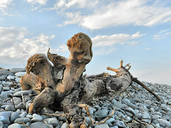 Folletti  della spiaggia (Marina di Rocca Imperiale) (NIKOZAR (Nicola Zaratta)) Tags: italy marina landscape italia nuvole coolpix sassi tronco calabria spiaggia hdr legno folletti p500 nikoncoolpix jonio imperiale marjonio nikonp500 roccaimperiale nikoncoolpixp500 coolpixp500 costajonica altojonio nikozar hdrp500 marinadiroccaimperiale