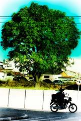 (Junior AmoJr) Tags: street color art sol colors arquitetura brasil photoshop canon cores sãopaulo chuva pb paisagem junior streetphoto cor snapfish gettyimages lightroom t3i atibaia photostreet itsnoon canonlightroom gettyimagesandtheflickrcollection fotocultura gettyimagesbrazil amojr junioramojr crowdart oliveirajunior riafestival