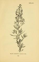 Anglų lietuvių žodynas. Žodis lysimachia terrestris reiškia <li>lysimachia terrestris</li> lietuviškai.