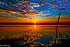 """Sunset !!! (Rambonp:loves all creatures of this universe.) Tags: blue trees red sky lake water birds clouds canon swans human boating chandigarh simmer """" lanndscape """"india"""" sukhnalakechandigarh micarttttworldphotographyawards canonedge"""