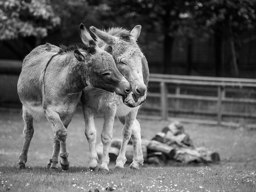 Thumbnail from Battersea Park Children's Zoo