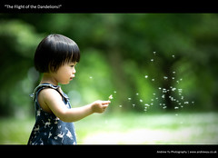 """The Flight of the Dandelions"" (awhyu) Tags: baby canon toddler flight 5d scared dandelions mkiii 135f2l"