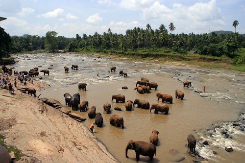 Orfanotrofio elefanti